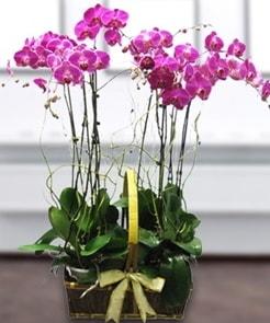 7 dallı mor lila orkide  Ağrı çiçek gönderme sitemiz güvenlidir