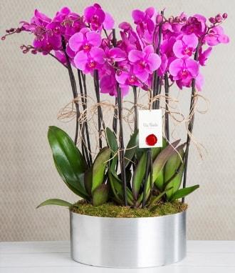 11 dallı mor orkide metal vazoda  Ağrı çiçek gönderme sitemiz güvenlidir