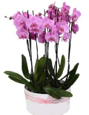 Beyaz seramik içerisinde 7 dallı mor orkide  Ağrı çiçekçi telefonları