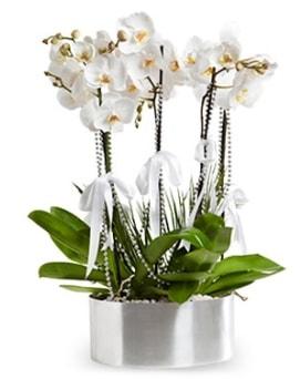 Beş dallı metal saksıda beyaz orkide  Ağrı çiçek yolla