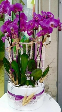 Seramik vazoda 4 dallı mor lila orkide  Ağrı online çiçek gönderme sipariş