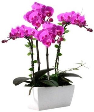 Seramik vazo içerisinde 4 dallı mor orkide  Ağrı çiçek satışı