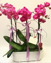 Beyaz seramik içerisinde 4 dallı orkide  Ağrı ucuz çiçek gönder