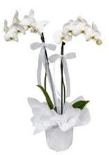 2 dallı beyaz orkide  Ağrı güvenli kaliteli hızlı çiçek