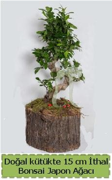 Doğal kütükte İthal bonsai japon ağacı  Ağrı çiçek gönderme
