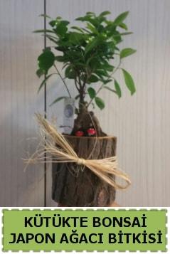 Kütük içerisinde doğal bonsai ağacı  Ağrı çiçekçi telefonları