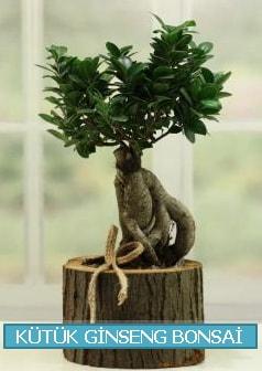 Kütük ağaç içerisinde ginseng bonsai  Ağrı çiçek gönderme sitemiz güvenlidir