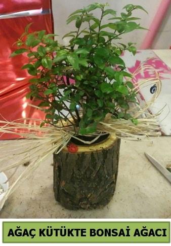 Doğal ağaç kütük içerisinde bonsai ağacı  Ağrı çiçek gönderme sitemiz güvenlidir