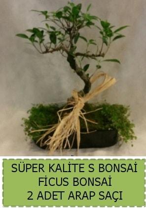 Ficus S Bonsai ve arap saçı  Ağrı çiçekçi telefonları