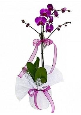 Tekli Mor Orkide  Ağrı çiçek yolla