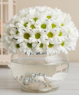 Fanusta beyaz Papatya  Ağrı çiçek satışı