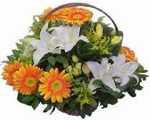 Ağrı online çiçekçi , çiçek siparişi  sepet modeli Gerbera kazablanka sepet