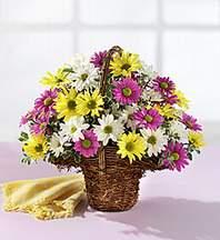 Ağrı çiçekçiler  Mevsim çiçekleri sepeti